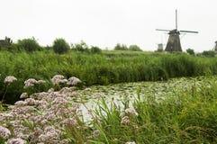 在Kinderdijk,荷兰的风车 库存照片