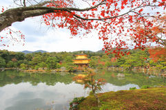 在Kinkakuji寺庙(金黄亭子),北京都,日本的秋天 图库摄影