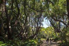 在Kirstenbosch植物园里面在开普敦 库存照片