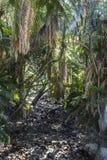在Kirstenbosch植物园里面在开普敦 库存图片