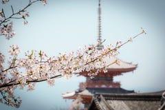 在Kiyomizu寺庙,京都的樱花 库存照片