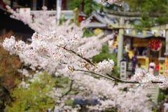 在Kiyomizu寺庙,京都的樱花 库存图片
