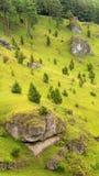 在Kleinziegenfeld谷的杜松倾斜在德国 免版税图库摄影