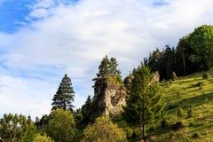 在Kleinziegenfeld谷的杜松倾斜在德国 库存图片