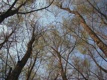 在km 95 3的春天胳膊Borcea 库存图片
