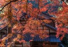 在Korankei的五颜六色的槭树momiji叶子 免版税库存照片