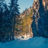 在Koscieliska谷的冬天 免版税库存照片