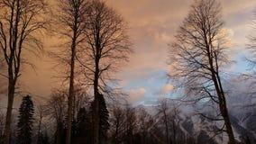 在Krasnaya Polyana、树和有薄雾的积雪覆盖的峰顶山的冬天日落  库存图片