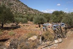在Kritsa附近的橄榄树小树林在克利特希腊 管道工程管组和轻拍灌溉系统的 免版税库存照片