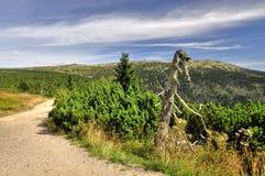 在Krkonose的路径 图库摄影