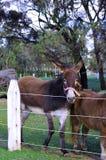 在Kuchel庄园的入口的驴 库存图片