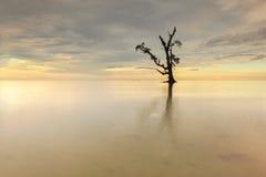 在Kudah海滩沙巴马来西亚的一棵偏僻的唯一树 免版税库存图片
