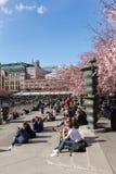 在Kungstradgarden公园的樱花 库存照片