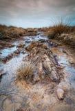 在kynance小海湾附近的沼泽地在康沃尔郡英国英国 库存图片