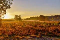 在LÃ ¼ neburg荒地的日出日落 免版税库存图片