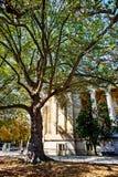 在L `凯旋门附近的老树在巴黎 库存图片