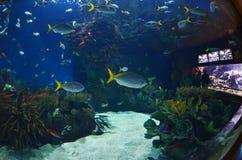在L'Oceanografic水族馆的玻璃隧道 免版税库存图片