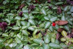 在La福尔图纳瀑布生态储备的热带雨林叶子和厂绿色花床在哥斯达黎加 免版税库存照片