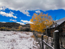 在La薇塔的秋天 免版税库存照片