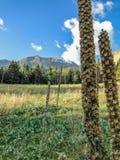 在La薇塔的种子荚 免版税库存图片