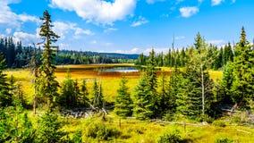 在Lac Le Jeune Road附近陷入沼泽由坎卢普斯,不列颠哥伦比亚省,加拿大 免版税库存照片