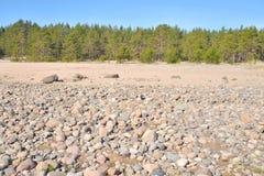 在Ladoga湖的海滩在早晨 免版税库存图片
