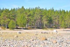在Ladoga湖的海滩在早晨 库存图片