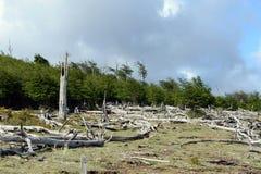 在Lago布兰科岸的下落的树  免版税库存图片