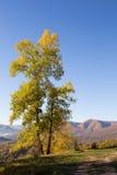 在Lago-Naki山的秋天风景  库存照片