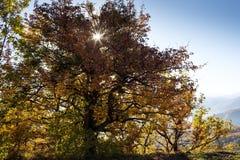 在Lago-Naki山的秋天风景  免版税库存图片