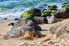 在Laniakea海滩,夏威夷的巨型绿浪乌龟 免版税库存照片