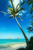在Lanikai海滩, O'ahu, Hawai'i的棕榈树 免版税库存照片