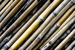 在lanscape视图的竹纹理 免版税库存照片