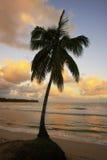 在Las Terrenas的倾斜的棕榈树靠岸在日落, Samana penins 图库摄影