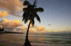 在Las Terrenas的倾斜的棕榈树靠岸在日落, Samana penins 免版税图库摄影