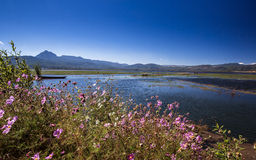 在Lashihai湖的花 免版税库存图片