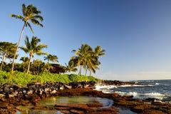 在Lawai的棕榈树使- Poipu,考艾岛,夏威夷,美国靠岸 库存图片