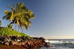 在Lawai的棕榈树使- Poipu,考艾岛,夏威夷,美国靠岸 库存照片