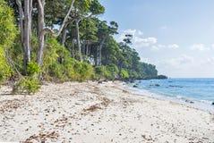 在laxmanpur海滩的森林边缘 免版税库存照片