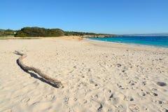 在Lazzaretto海滩的漂流木头 库存照片