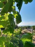 在leafage下的树树荫有蓝天背景 免版税图库摄影