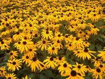 在Leamington温泉的秋天花 免版税图库摄影
