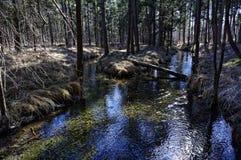 在Lechauen的早期的春天的岸边的森林风景 免版税库存图片