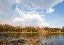 在Lehardy急流附近的黄石河在黄石国家公园在怀俄明美国 免版税库存图片
