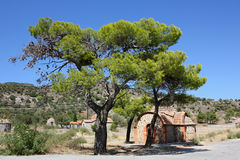 在LESVOS的杉树,希腊 库存图片