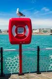 在lifebuoy的海鸥 免版税库存照片