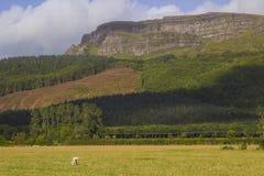 在Limavady附近的庄严Binevenagh山山顶在北爱尔兰北海岸的伦敦德里郡  免版税库存图片