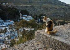 在Lindos镇的猫在Rodos,希腊 免版税库存照片