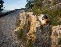 在Lindos镇的猫在Rodos,希腊 库存照片