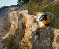 在Lindos镇的猫在Rodos,希腊 免版税库存图片